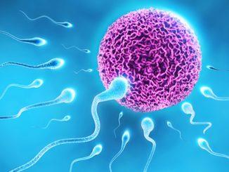 erkeklerde sperm sayısı, sperm sayısı azalır mı, erkeklerdeki sperm sayısı