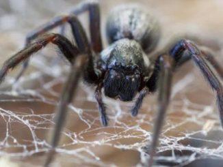 örümcek ilaçlaması, örümcek nasıl ilaçlanır, örümcek ilaçlama işlemi