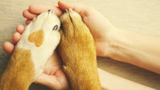 evcil hayvan sahiplerinin hakları, evcil hayvan besleyenlerin yasal hakları, evcil hayvanlar ve yasal haklar